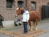 Mobile Pferdewaage Klaus Finke