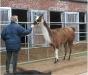 Der Beweis, dass nicht nur Pferde auf eine Pferdewaage können ...